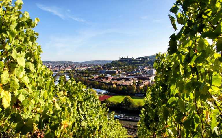 Wuerzburg_Wein_Blick2